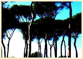 Guia de Roma 5