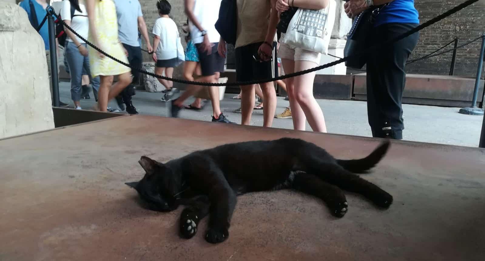 un felino en la arena del Coliseo