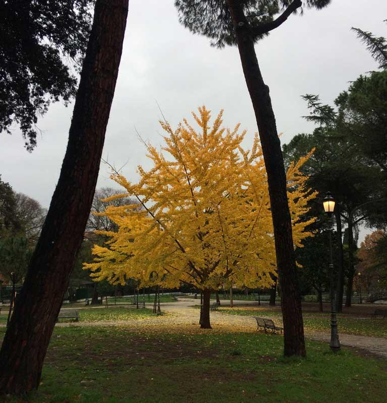 otoño en roma